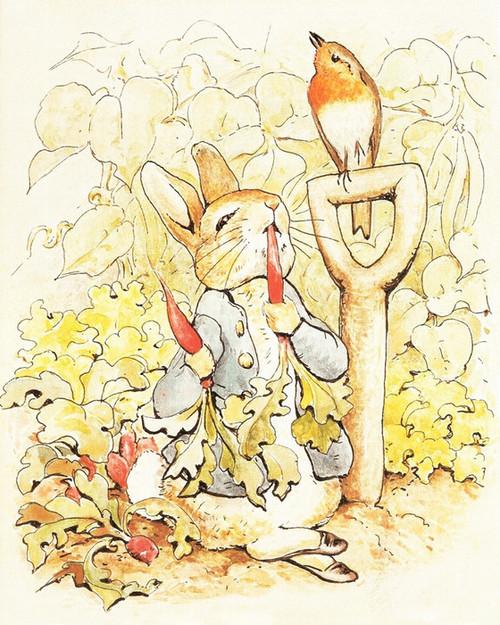 Art Prints of Peter Eats Carrots in the Garden by Beatrix Potter