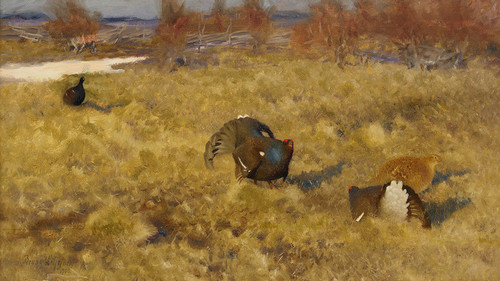 Art Prints of Black Grouse Displaying by Bruno Liljefors