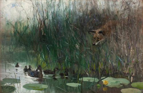 Art Prints of Flock of Ducks and Sneaky Fox by Bruno Liljefors
