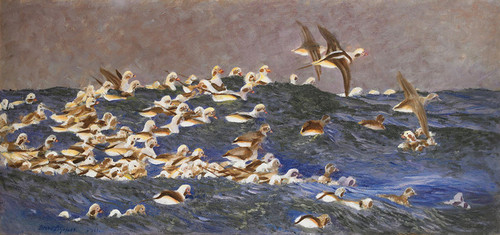 Art Prints of Long-Tailed Ducks in the Outer Archipelago by Bruno Liljefors
