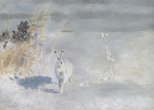 Art Prints of Snow Hare by Bruno Liljefors