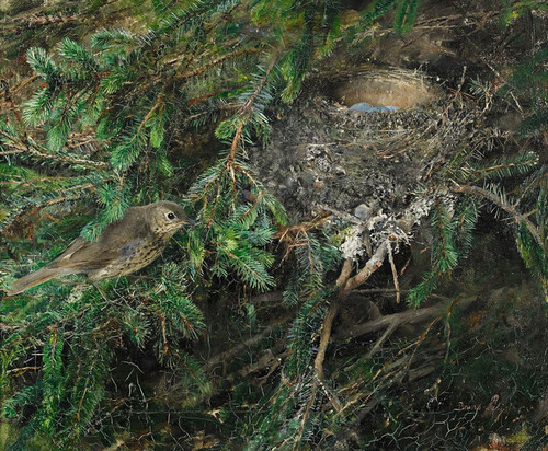 Art Prints of Song Thrush at Nest by Bruno Liljefors