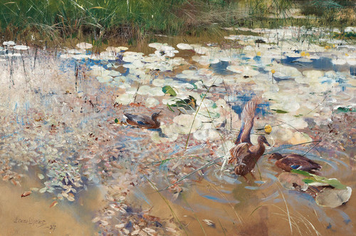 Art Prints of Wild Ducks by Bruno Liljefors