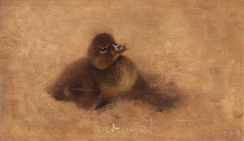 Art Prints of Duckling by Bruno Liljefors