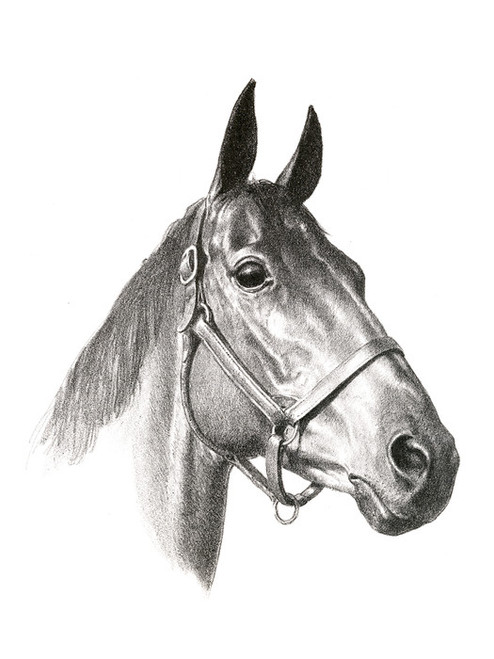 Art Prints of Elkridge Steeplechaser by C.W. Anderson
