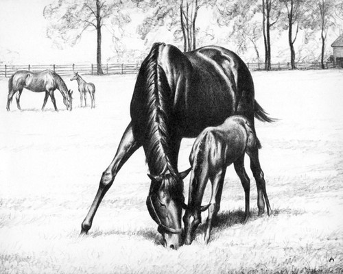 Art Prints of Mares and Colts Grazing by C.W. Anderson