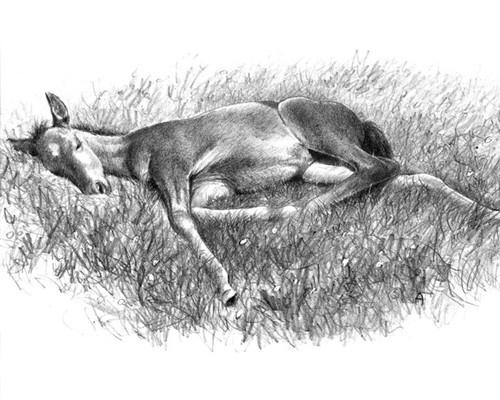 Art Prints of Siesta by C.W. Anderson
