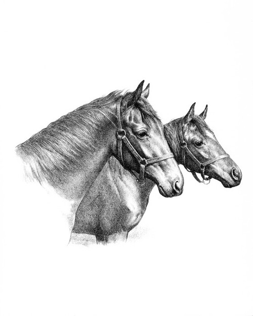 Art Prints of Young Fillies by C.W. Anderson