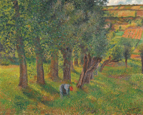 Art Prints of Cabbage in Pontoise by Camille Pissarro