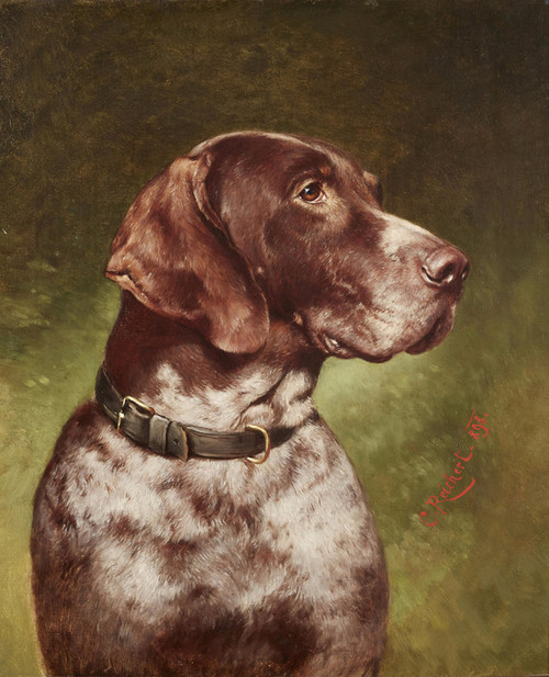 Art Prints of Head of a German Shorthaired Pointer by Carl Reichert