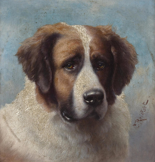 Art Prints of Head Portrait of a St. Bernard by Carl Reichert