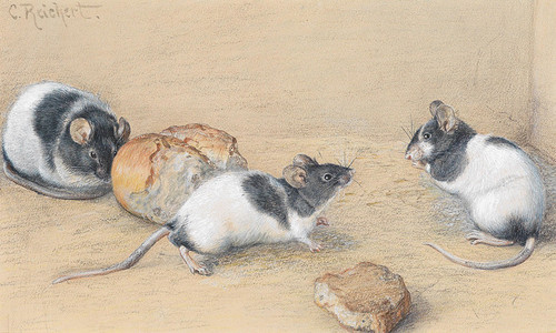 Art Prints of Mice by Carl Reichert
