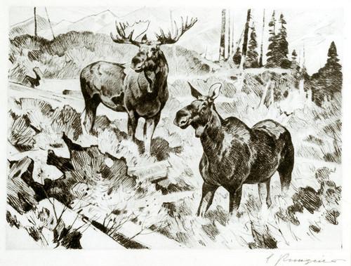 Art Prints of Alaskan Moose by Carl Rungius