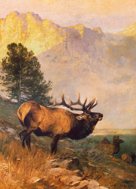 Art Prints of Bull Elk by Carl Rungius