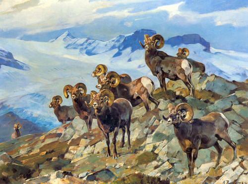 Art Prints of Big Horn Rams by Carl Rungius
