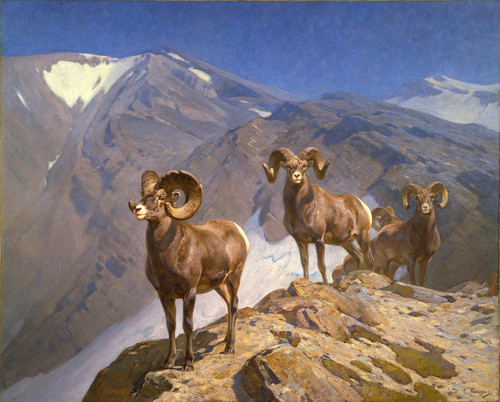 Art Prints of Bighorn Sheep on Wilcox Pass by Carl Rungius