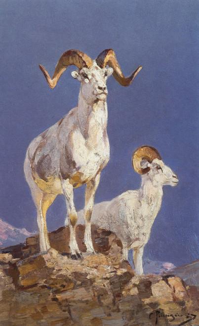 Art Prints of Dall Sheep by Carl Rungius