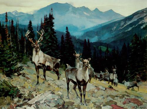 Art Prints of Mountain Caribou by Carl Rungius