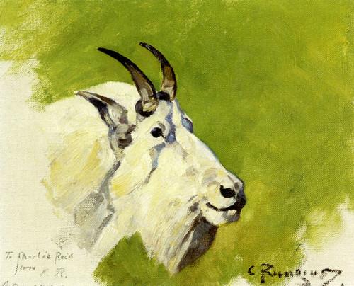 Art Prints of Mountain Goat Head by Carl Rungius