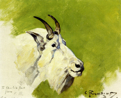 Art Prints of Mountain Goat Head by Carl Rungius