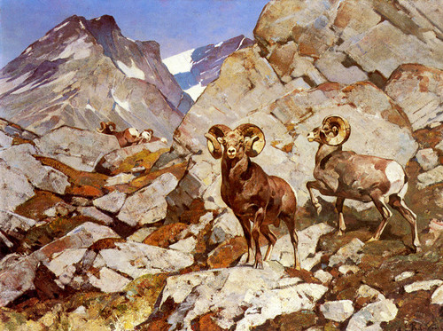 Art Prints of Sheephunter's Dream by Carl Rungius