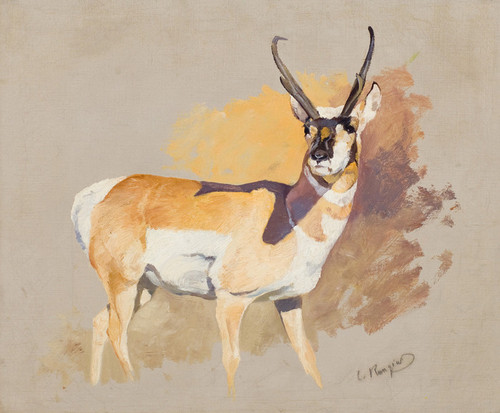 Art Prints of Antelope by Carl Rungius