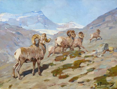 Art Prints of Bighorn Sheep, Nigel Pass, Alberta, 1919 by Carl Rungius
