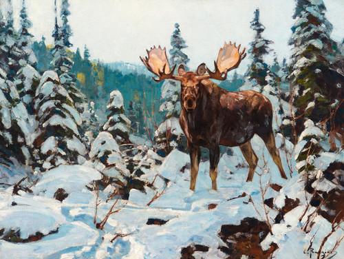 Art Prints of Bull Moose by Carl Rungius