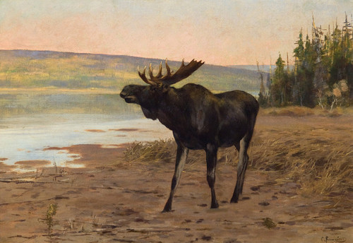 Art Prints of Moose near Banff by Carl Rungius