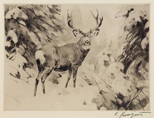 Art Prints of Mule Deer by Carl Rungius