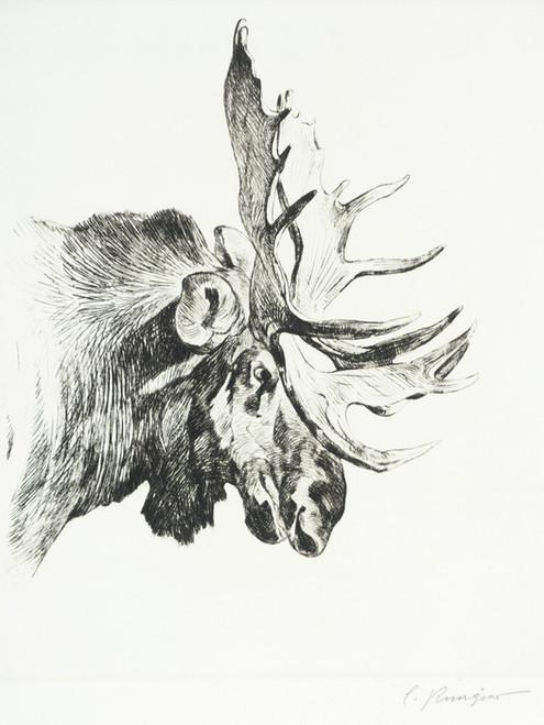 Art Prints of Old Bull by Carl Rungius