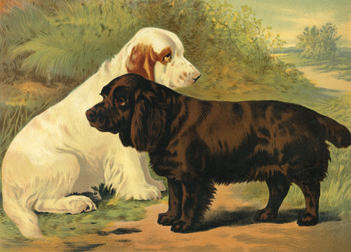 Art Prints of Clumber and Sussex Spaniels by Vero Shaw