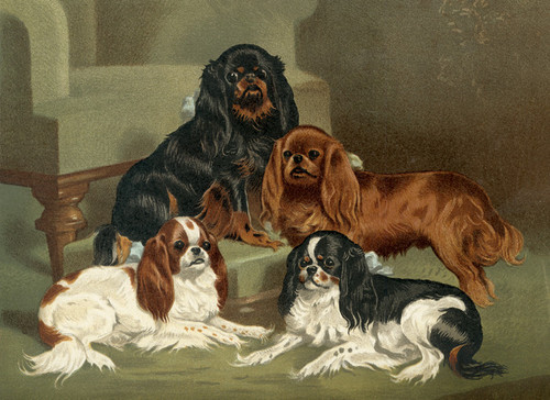 Art Prints of Toy Spaniels by Vero Shaw