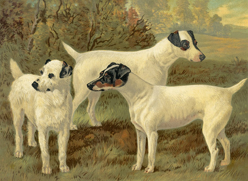 Art Prints of Fox Terrier by Vero Shaw