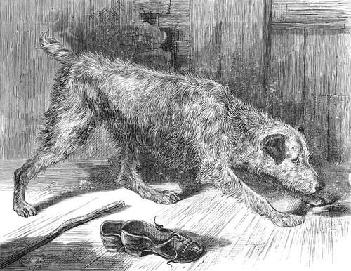 Art Prints of Irish Terrier III by Vero Shaw