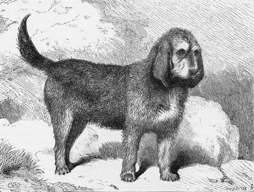 Art Prints of Otterhound by Vero Shaw