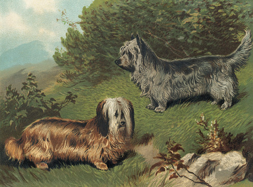 Art Prints of Skye Terriers by Vero Shaw