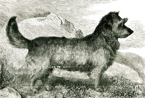 Art Prints of Skye Terrier by Vero Shaw
