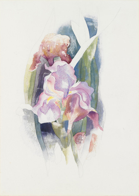 Art Prints of Purple Iris by Charles Demuth
