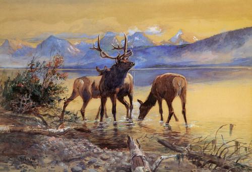 Art Prints of Elk in Lake McDonald, 1906 by Charles Marion Russell
