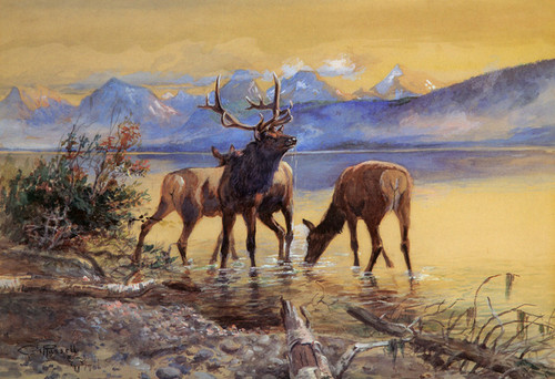 Art Prints of Elk in Lake McDonald, 1906 by Charles Marion Russell