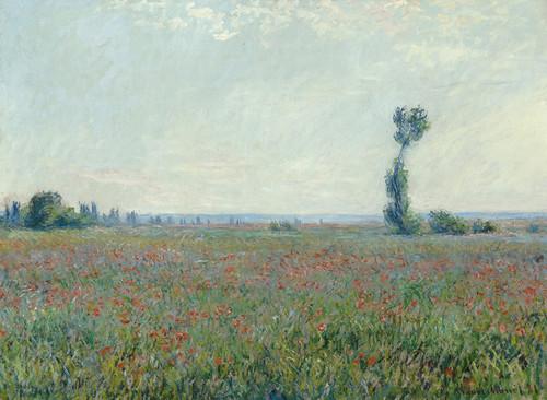Art Prints of Poppy Field, 1881 by Claude Monet