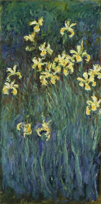 Art Prints of Yellow Irises by Claude Monet