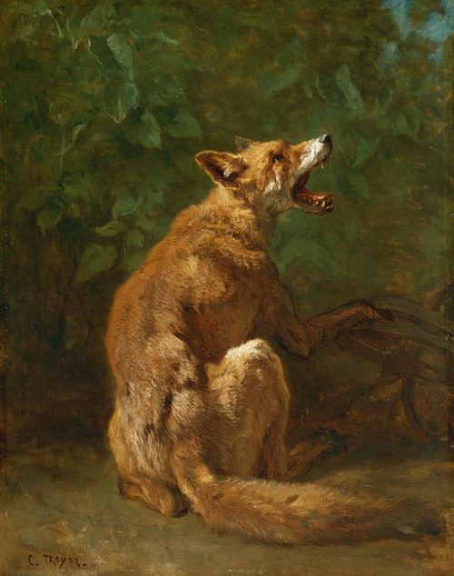 Art Prints of Fox in a Trap by Constant Troyon