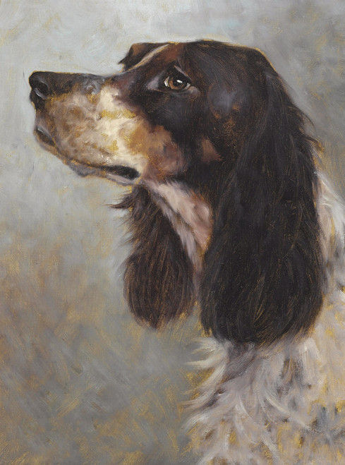 Art Prints of Head of a Springer Spaniel, English Continental School