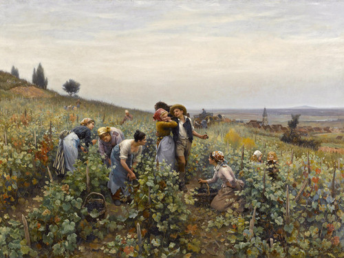 Art Prints of Grape Harvest by Daniel Ridgway Knight