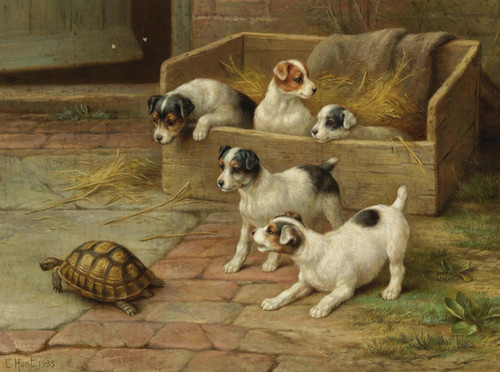Art Prints of Puppies and a Tortoise by Edgar Hunt
