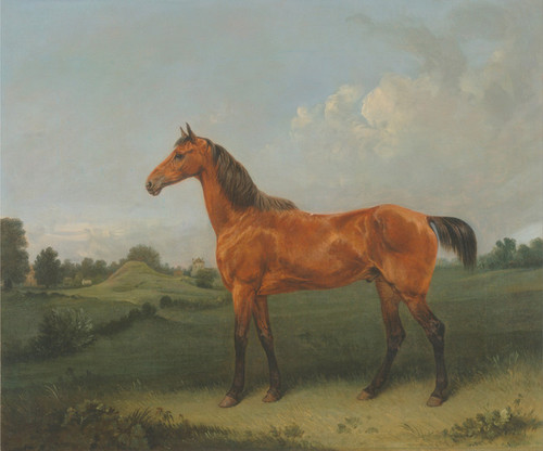 Art Prints of A Bay Horse in a Field by Edmund Bristow