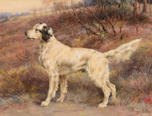 Art Prints of Setter on Profile by Edmund Henry Osthaus