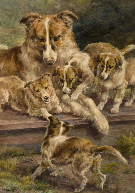 Art Prints of Collie and Pups by Edmund Henry Osthaus